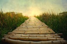bamboo-path-in-grass-at-sunrise-atul-tater
