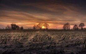 harvested_cornfield_by_jonny_island-d357lko