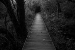 dark-path-wallpaper